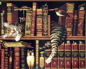 bibliotheque-chat